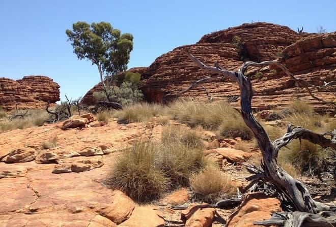 Canicule exceptionnelle en Australie