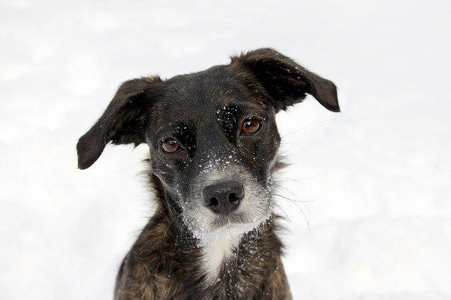 Comment promener son chien en hiver dans de bonnes conditions?